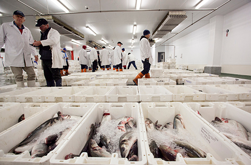 Dropping prices are putting the UK catching sector under pressure amid the coronavirus pandemic