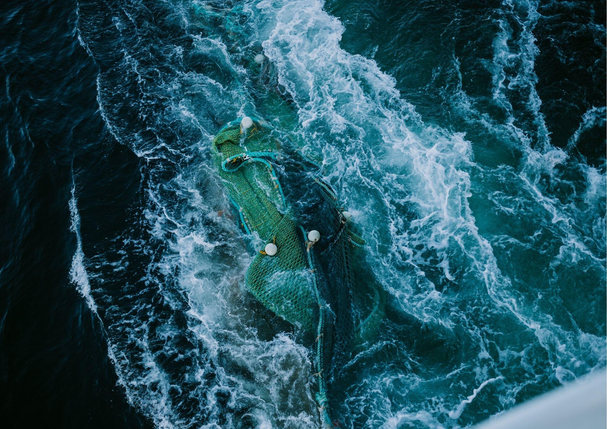 Behind the headlines: FASFA response to Seaspiracy