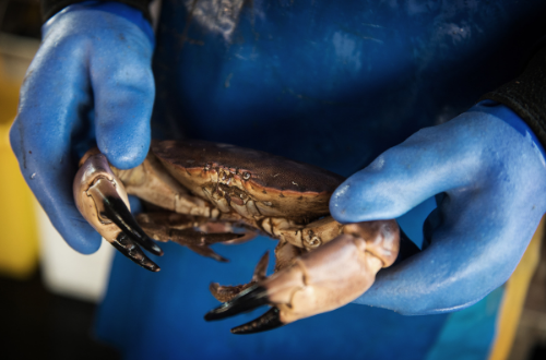 New fisheries management groups to provide sustainability leadership for UK shellfish